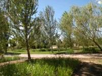 """""""Nits d'estiu"""" al Jardí Botànic-Arborètum amb concerts gratuïts"""