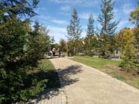 Celebrada la visita guiada a l'Arborètum per contemplar els colors dels arbres i arbustos a la tardor
