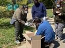 El centre de Fauna de Vallcallent allibera una desena d'eriçons recuperats a l'Arborètum-Jardí Botànic de Lleida
