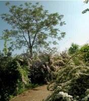 El Jardí Botànic-Arborètum de Lleida ofereix al públic diverses activitats de primavera