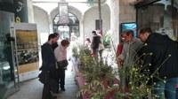 Èxit de l'exposició de quasi 200 plantes i arbustos dels secans de Ponent Organitzada per l'Arborètum, l'IEI i la UdL